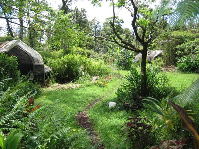 permaculture-quansut-hut-meadow